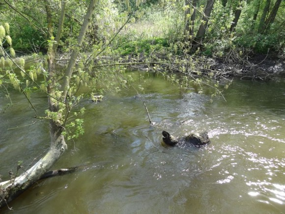 Utrata w okolicy Chodakówka