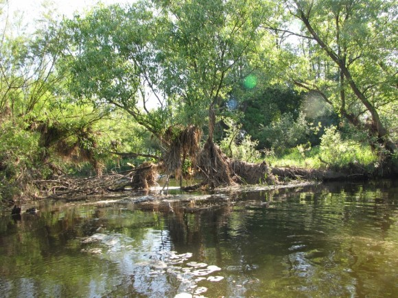 Wysoka trawa na drzewach oznacza stan wody wiosennej
